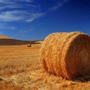 Action contre le trading des matières premières agricoles