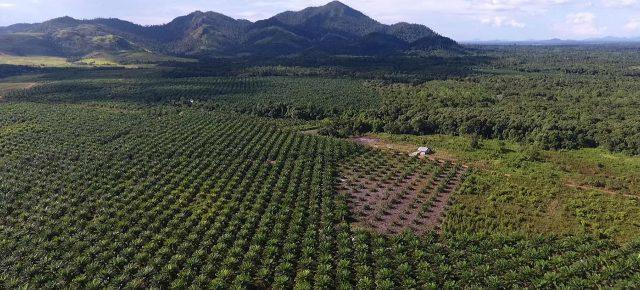 Investissements et accaparement des terres